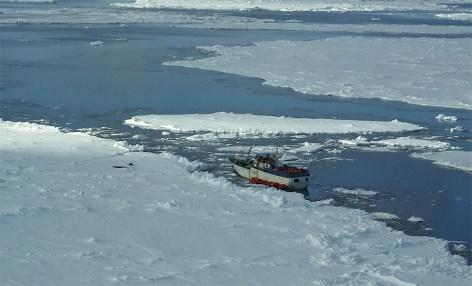 Судно «Спарта» в ледовом плену. © New Zealand Air Force/Reuters