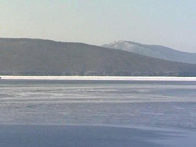 Киты оказались в ледовом плену Берингова моря