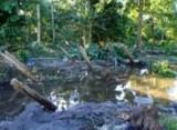 По Соломоновым островам прошли цунами. Кадр NTDTV