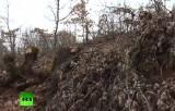 Незаконная вырубка леса в Греции. Кадр RT