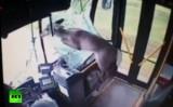 Олень в автобусе в США. Кадр RT / CAMTRAN