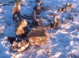 В Якутии найден хорошо сохранившийся мамонт. Кадр NTDTV