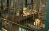 Под Бангкоком найдено большое количество диких животных в клетках. Кадр NTDTV