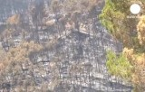 Сгоревший лес на Майорке, Испания. Кадр Euronews