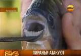 Ростовская пиранья. Кадр РЕН-ТВ