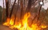 Лесной пожар уничтожает деревья в Австралии. Кадр Euronews