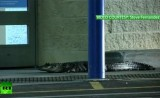 Крокодил идёт в супермаркет во Флориде, США. Кадр RT