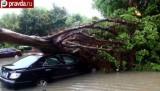Последствия тайфуна Фитоу в Китае. Кадр pravda.ru