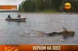 Вплавь на лосе. Кадр РЕН-ТВ