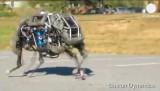 Робот Wildcat. Кадр Euronews
