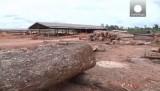 Вырубка леса в Бразилии. Кадр Euronews