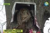 Образ Богородицы проявился на дереве в Белорусском селе. Кадр МТРК Мир