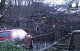 Сломанный штормом Ксавер деревья в Шотландии. Кадр Euronews