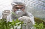 ГМО-эксперименты. Фото: clubs.ya.ru