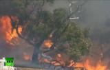 Лесной пожар в Австралии. Кадр RT