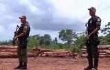 Нелегальный лесоповал в Бразилии. Кадр NTDTV