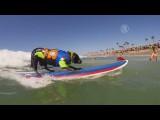 Собачий сёрфинг показали на пляже Калифорнии (новости)