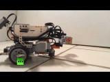 Робот-червь подарил ученым надежду на цифровое бессмертие