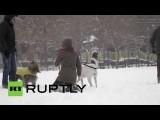 Внезапные каникулы: дети рады снежной буре в Нью-Йорке