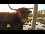 Европейские фермеры продолжают терпеть убытки из-за санкций против РФ