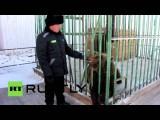 Заключенные иркутской колонии заботятся о медведях