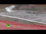 На калифорнийских пляжах гибнут крабы и киты